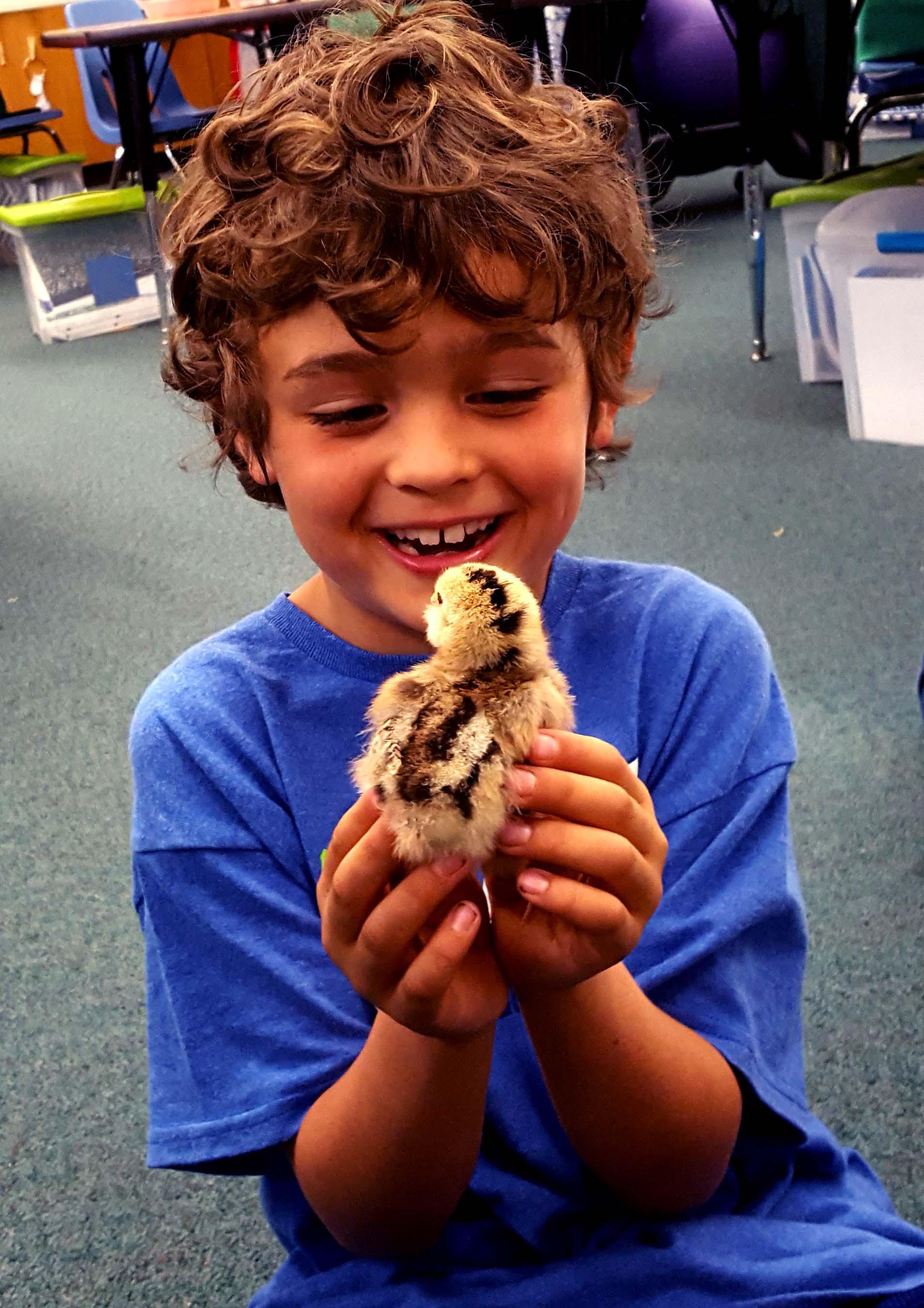 chickens_chicks_week1_henry_#1_edited