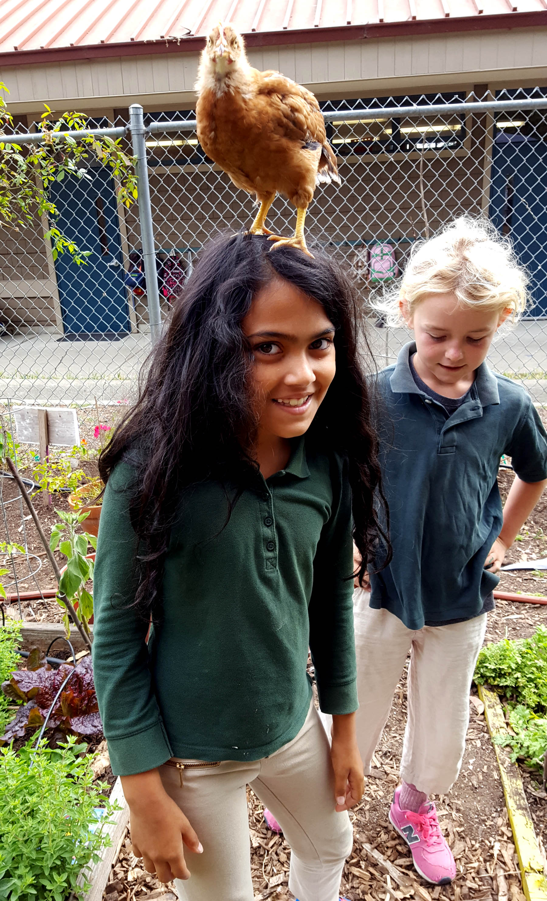chickens_chicks_week4_amani_copper_edited