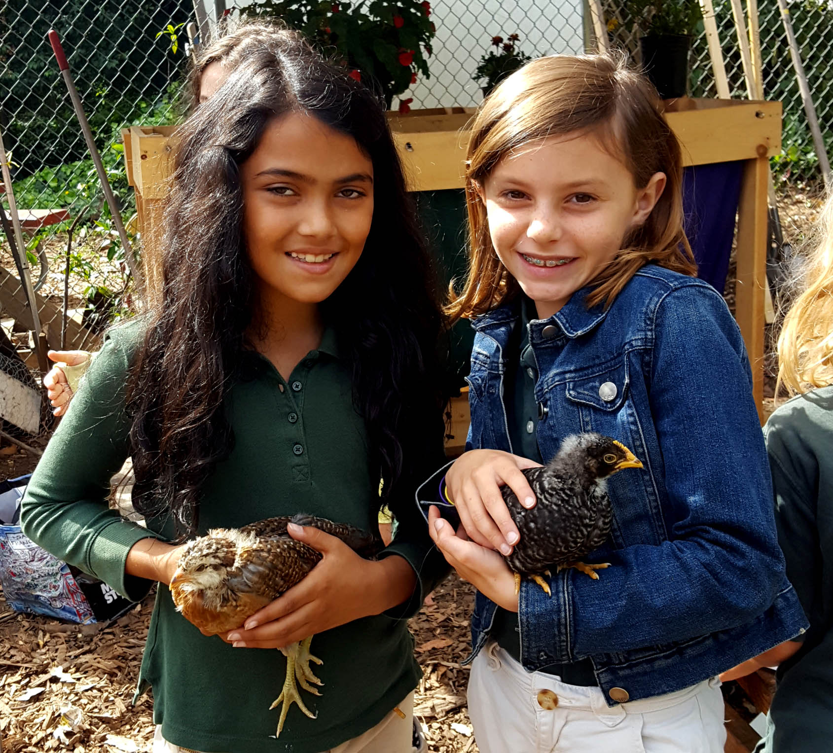 chickens_chicks_week4_amani_tessa_ firstborn_starlight_edited