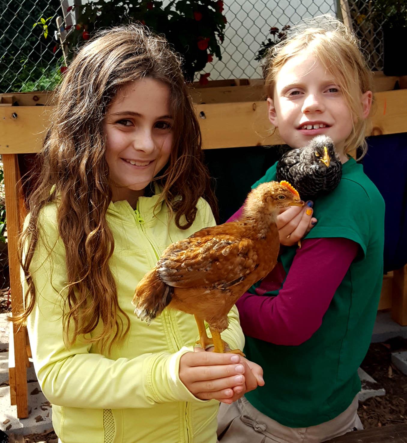 chickens_chicks_week4_lexie_jojo_copper_starlight_edited