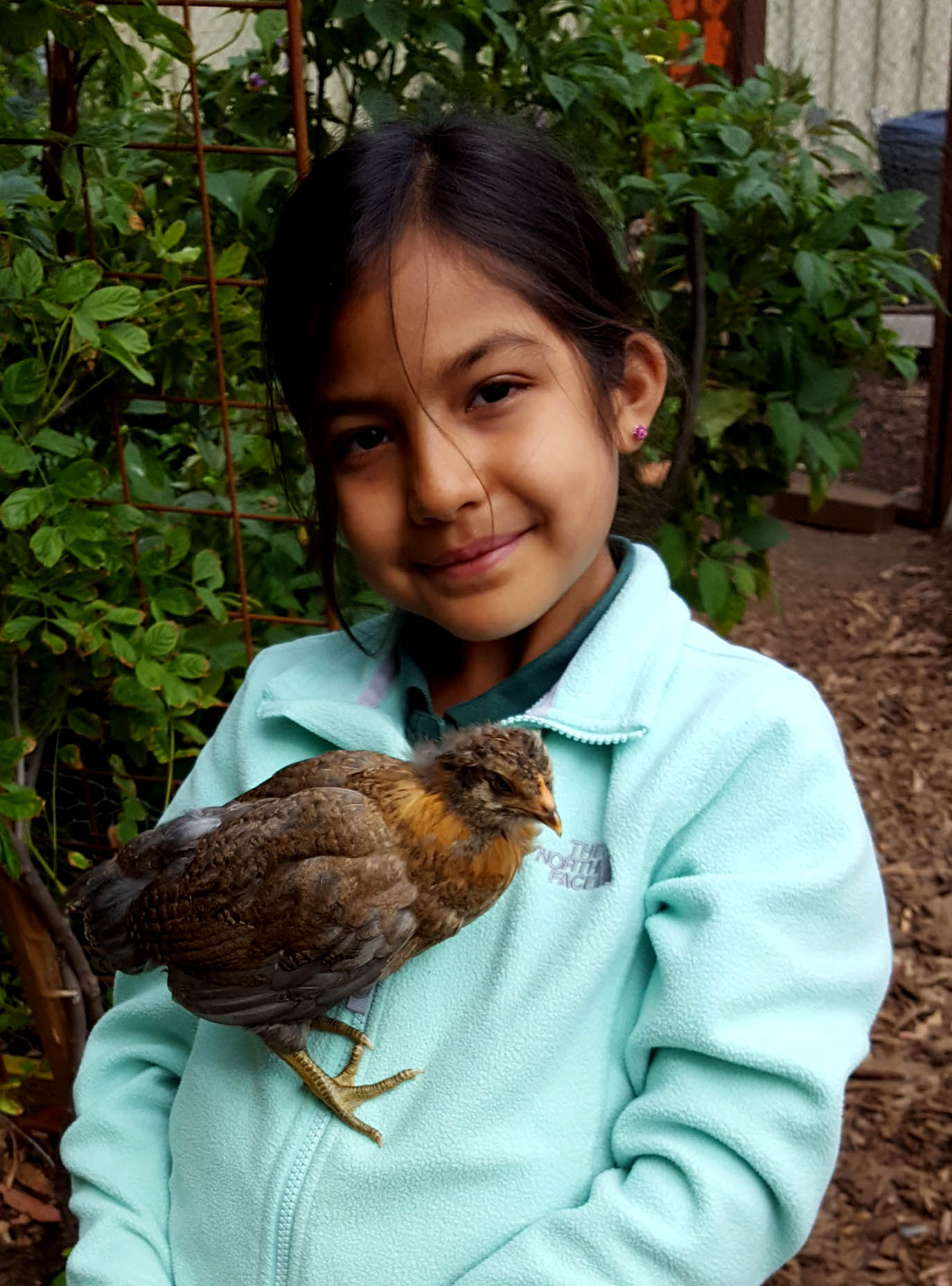 chickens_chicks_week4_raschell_firstborn_edited