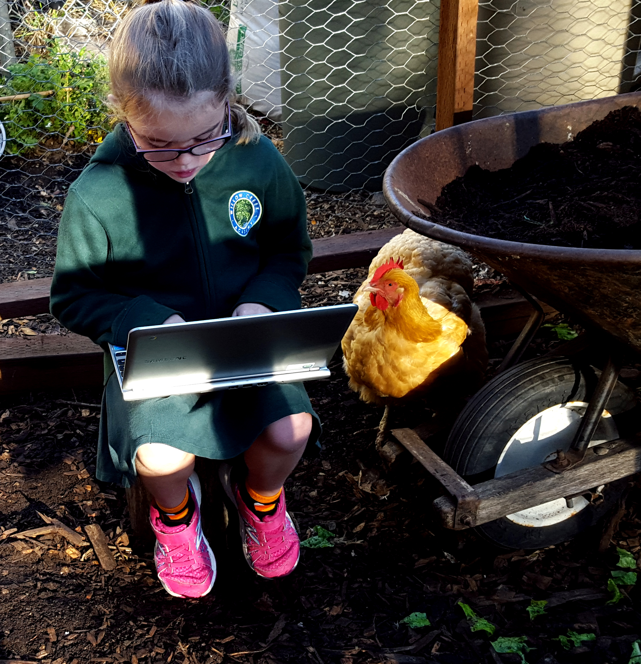 chickens_technology_chole_goldie_edited