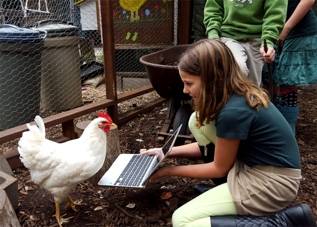 chickens_technology_hilary_sunshine_keyboaord_630x451