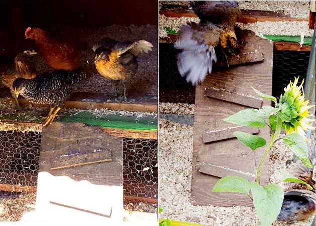 chicks_5w_rampdown_rocket_630x451