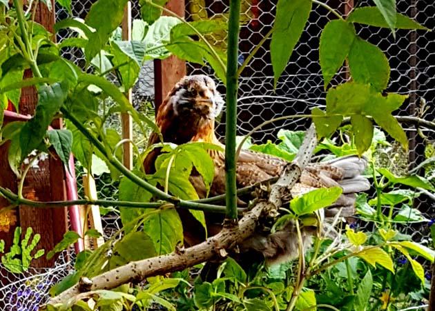 chicks_9w_rocket_tree_630x451