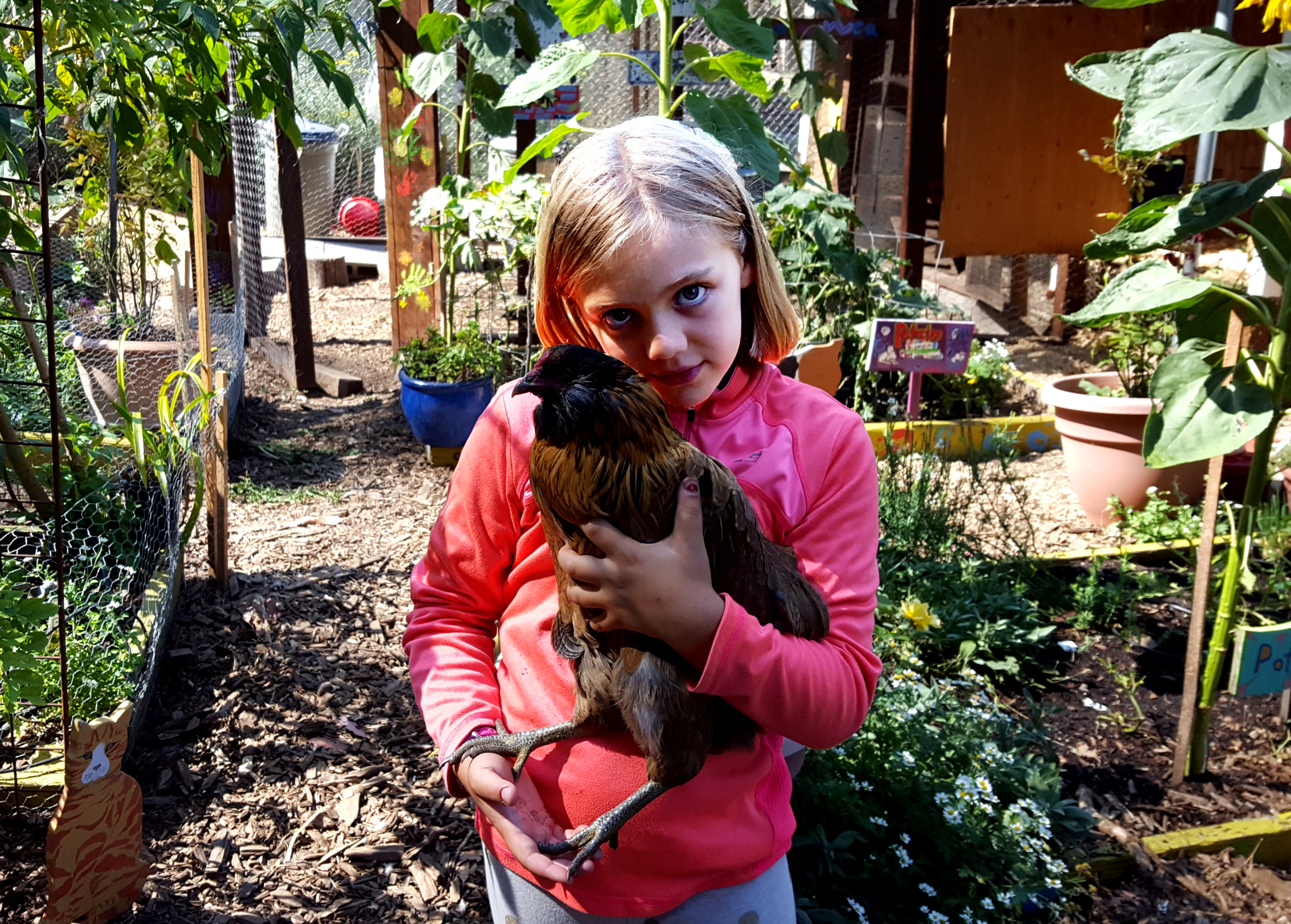 chickens_julia_rocket_630x451