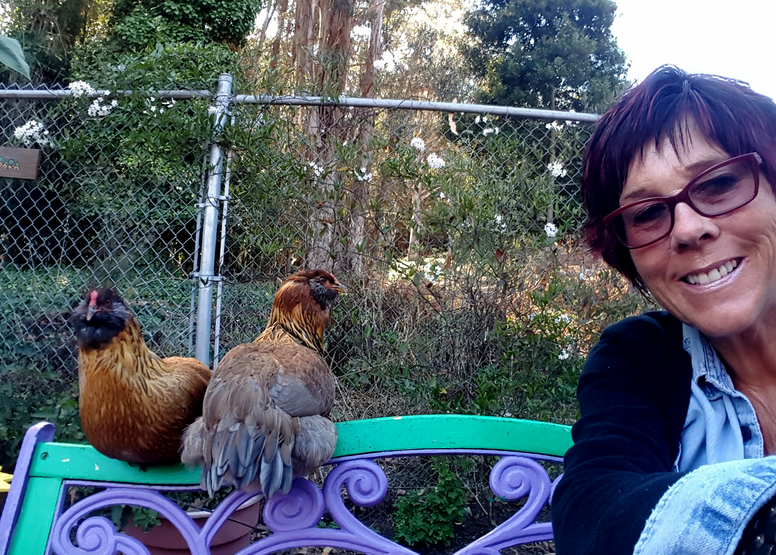 chickens_rocket_rosie_barbara_630x451