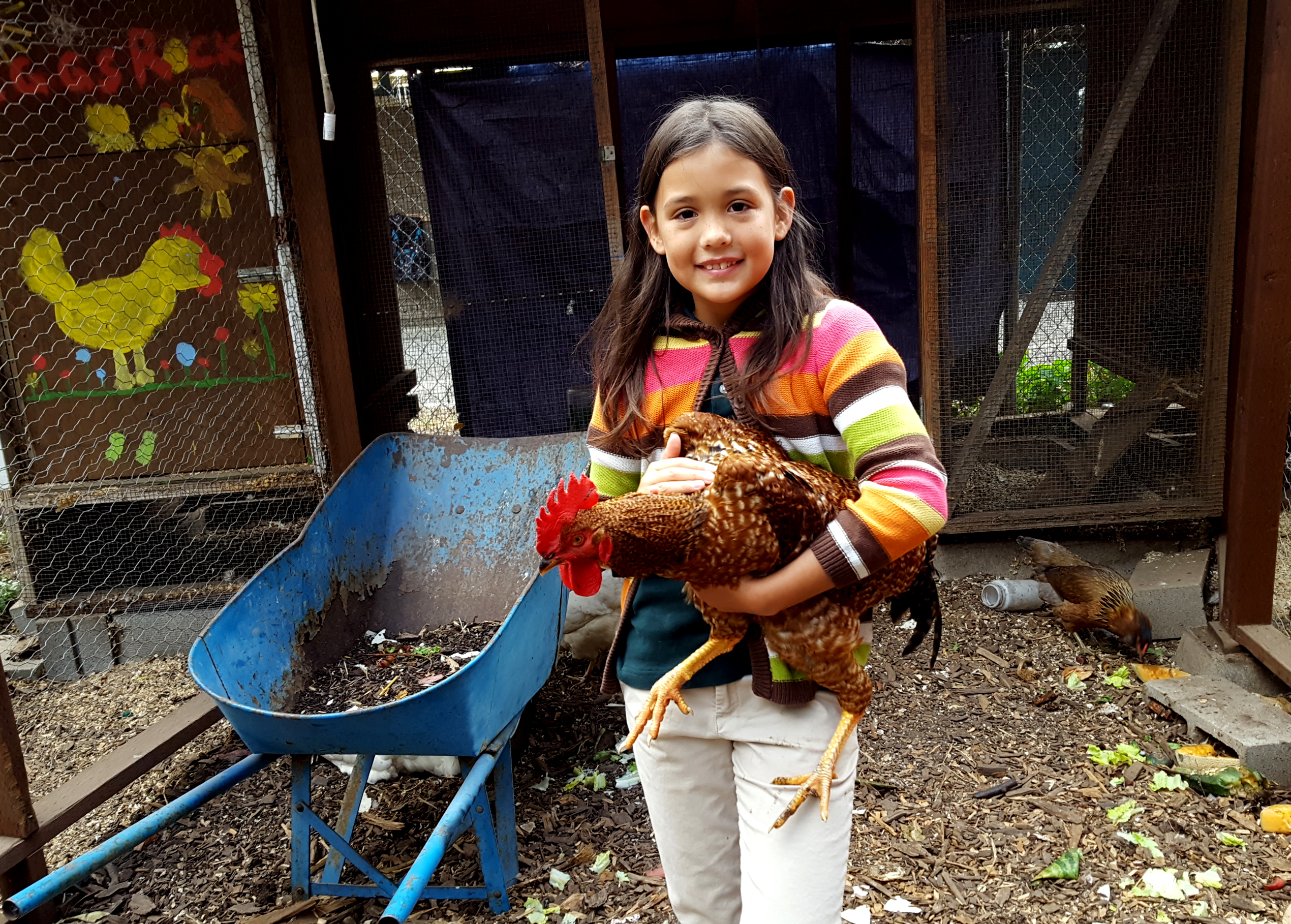 chickens_roo_maezy_630x451