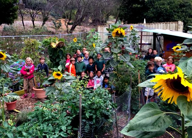 class_sunflowers_630x451