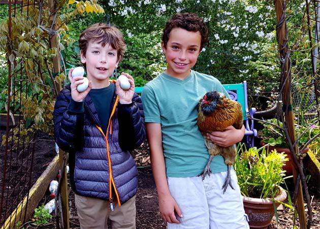 fridaygarden_chickens_eggs_dean_dante_630x451
