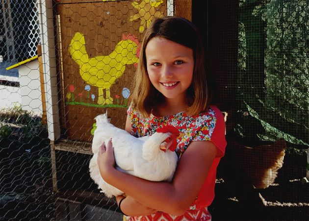 chickens_hillary_sunshine_092615_630x451