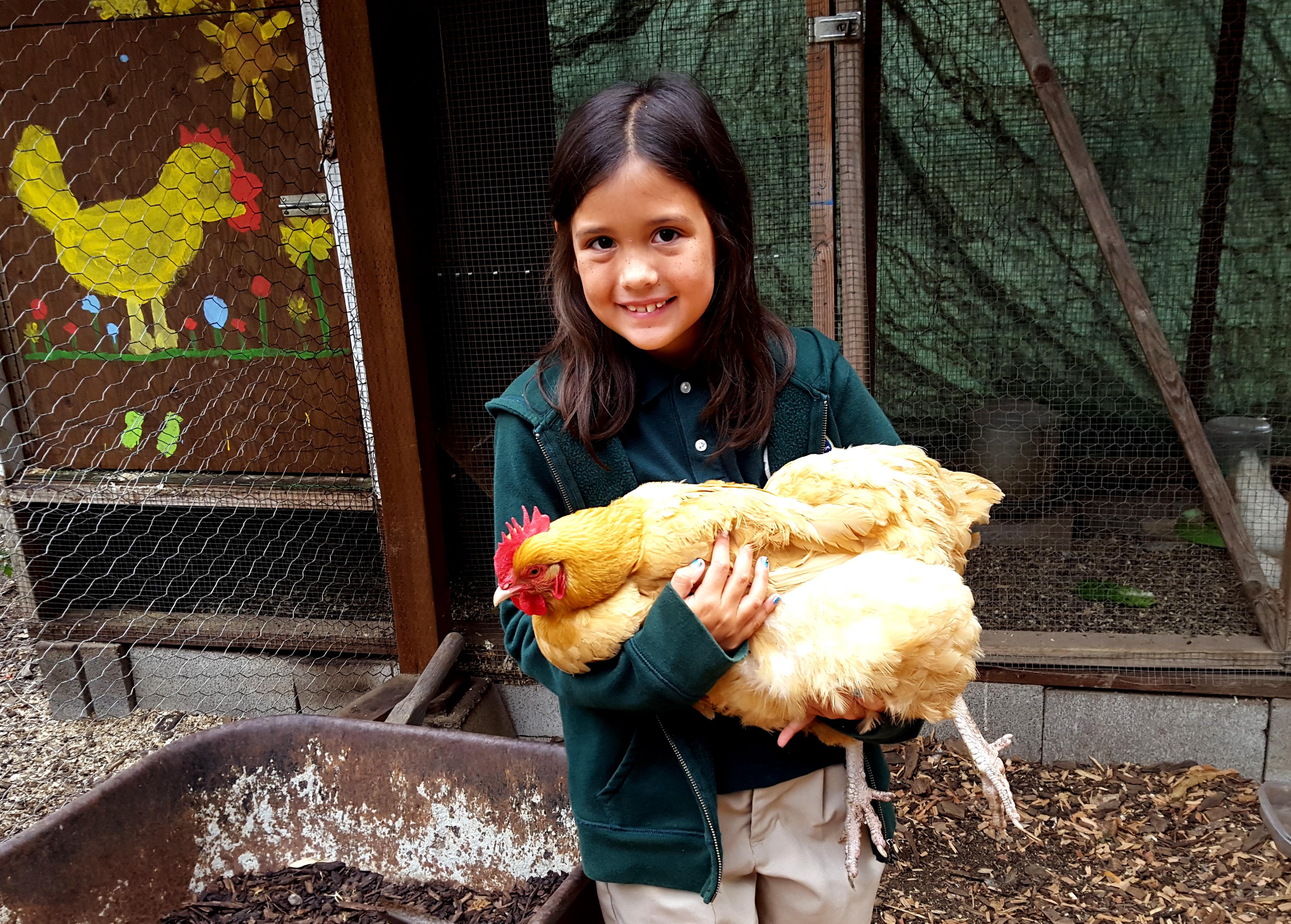 chickens_maezy_goldie_630x451