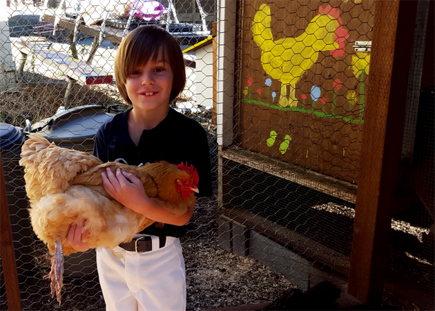 chickens_sam_630x451