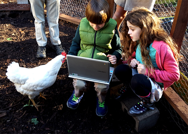 chickens_sunshine_sam_lexie_laptop_630x451