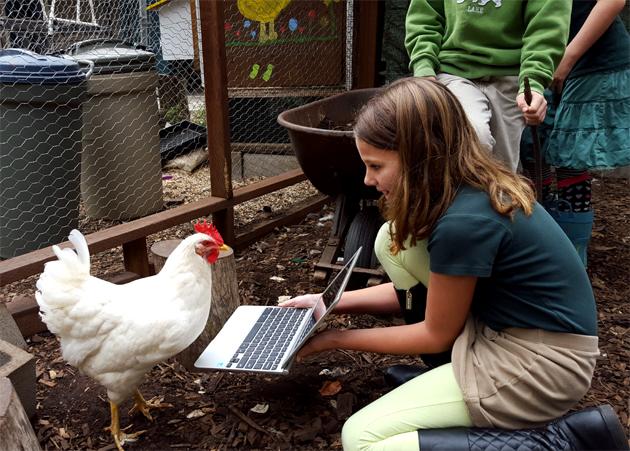 chickens_technology_hilary_sunshine_keyboaord_630x451