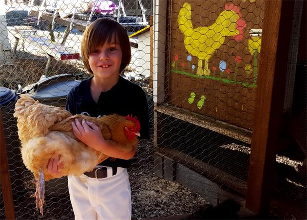 chickens_sam_630x451