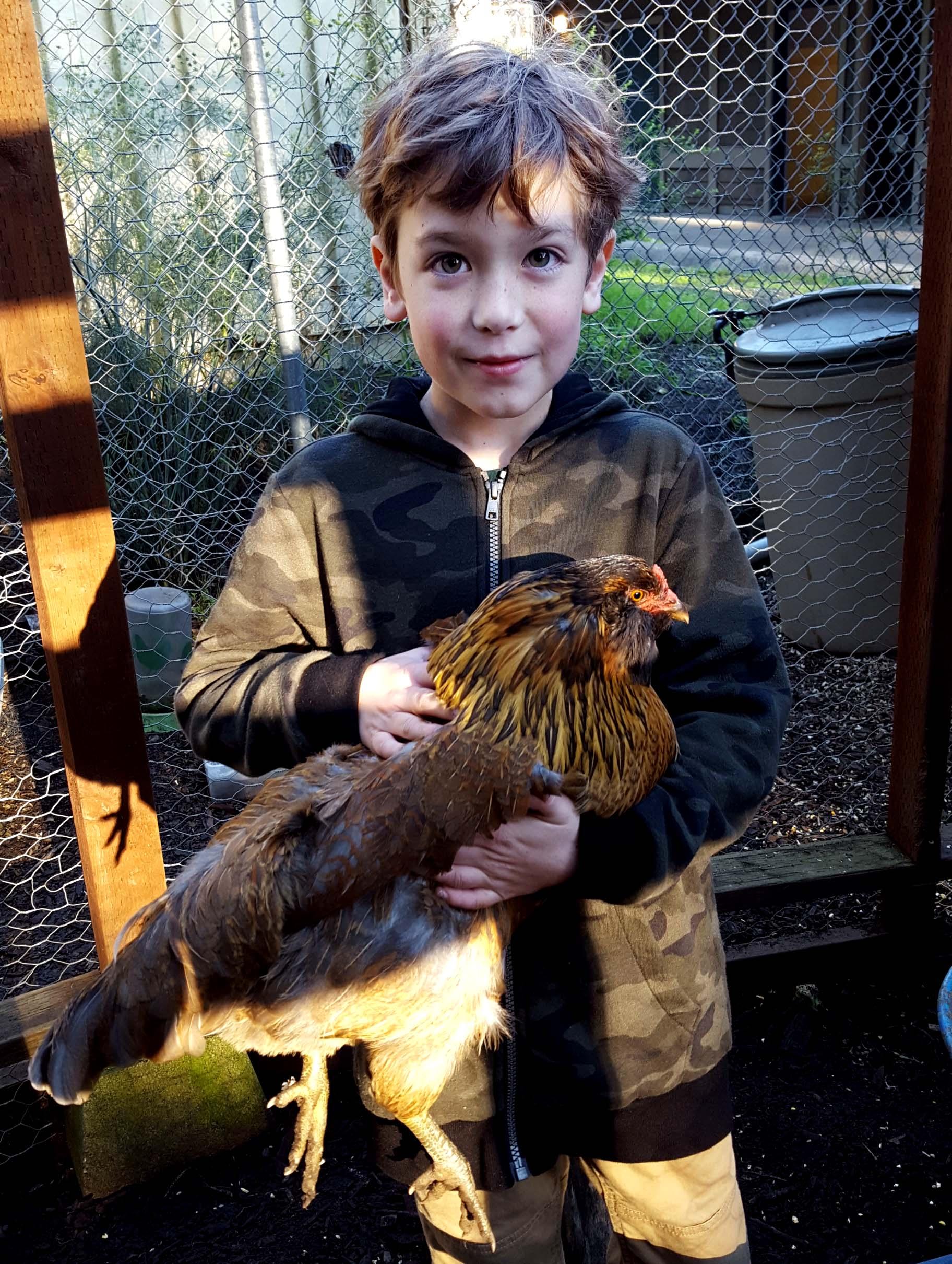 chickens_rocket_dean_edited