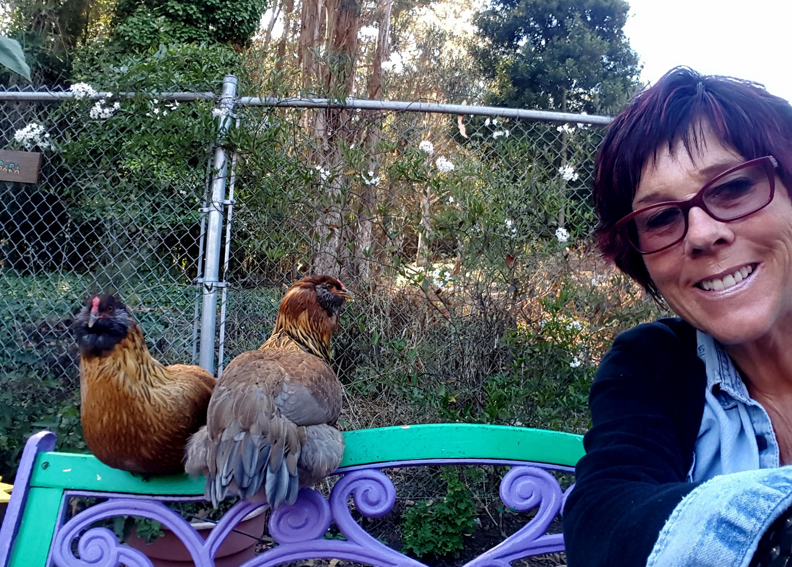 chickens_rocket_rosie_barbara_630x451