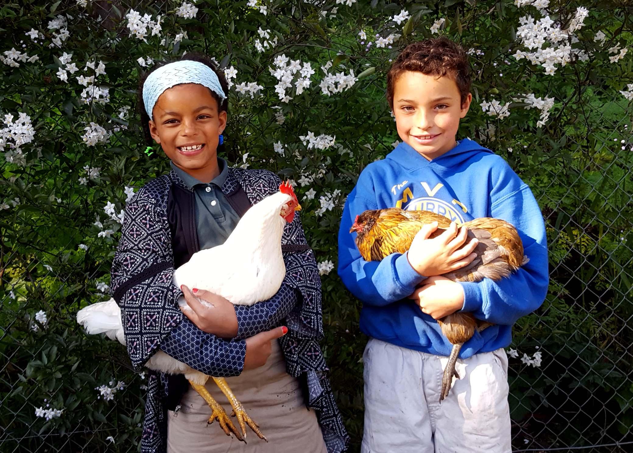 fridaygarden_chickens_sophie_dante_630x451